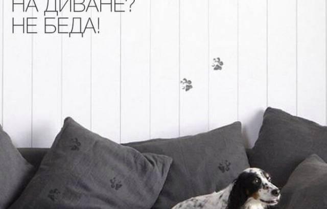 Как очистить ковер от шерсти домашних животных